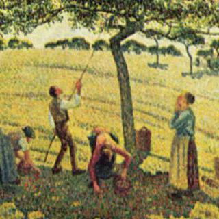 에라니에서의 사과 수확