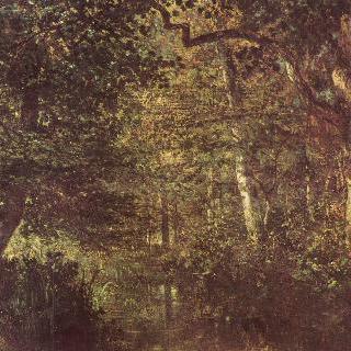 숲 속 개울