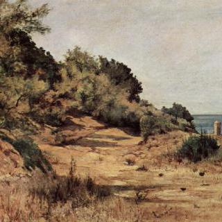 숲으로 덮인 해변
