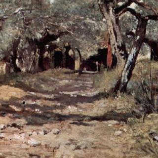 올리브나무 숲길