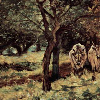 올리브나무 숲속의 황소 두 마리