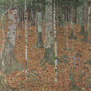 자작나무 숲