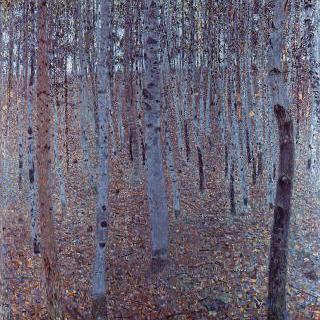 너도밤나무 숲
