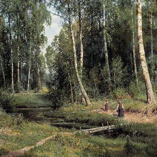 자작나무 숲 속 개울