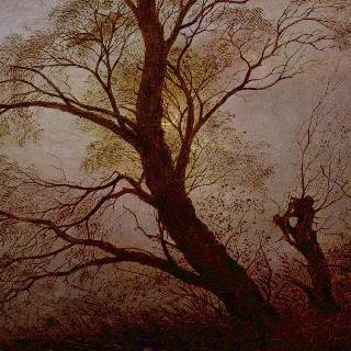 달빛 속의 나무들
