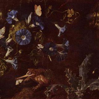 푸른 메꽃, 두꺼비와 곤충들