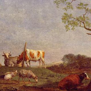 쉬고 있는 가축떼