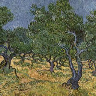 올리브나무숲