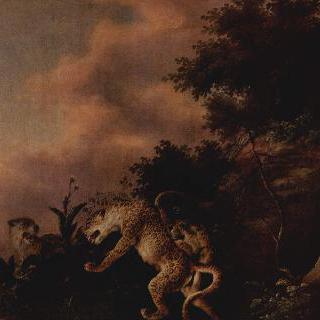 수멧돼지를 덮치는 표범들