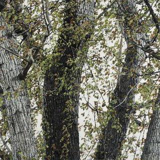 나무 1002