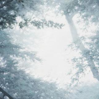 Condition-Light