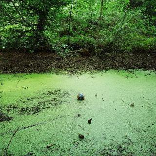 Tenseless No.5 Swamp