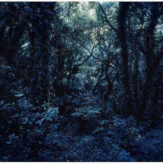Forbidden Forest-2