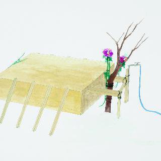 직립 식물