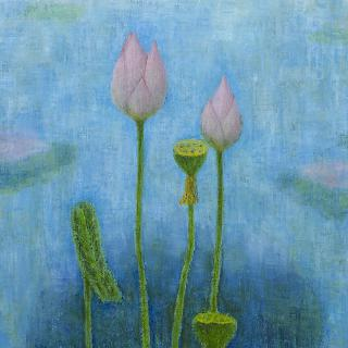 연꽃 이야기 1