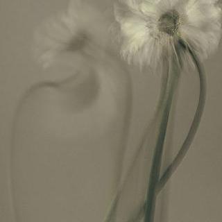 열광하는 꽃 11
