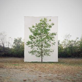 Tree No.9
