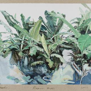 바나나 나무