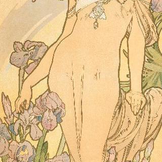 꽃 : 아이리스