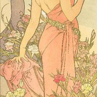 꽃 : 카네이션