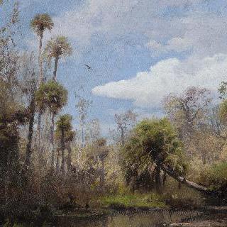 플로리다 야자나무