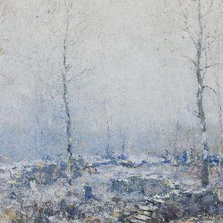 오래된 나무 숲