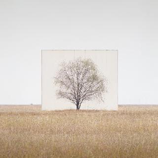 Tree… No.3