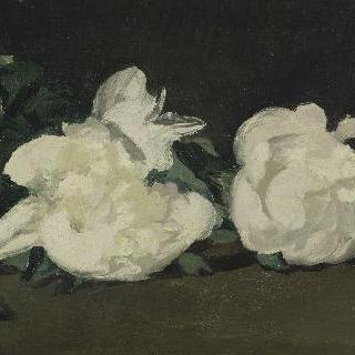 흰 모란꽃 가지와 화훼가위