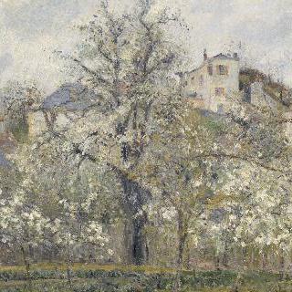 봄, 꽃핀 자두 나무 (퐁투아즈의 봄, 정원의 꽃을 피운 나무들)