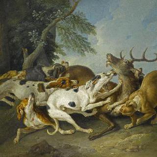 일곱, 여덟 마리의 사냥개들에 포획된 사슴