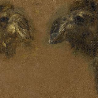 단봉 낙타의 머리