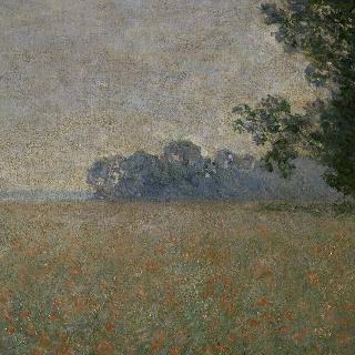 개양귀비 밭