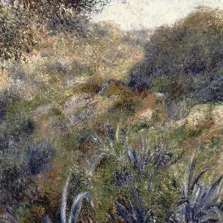 알제리의 풍경, 팜 소바주의 골짜기 (알제의 외곽지역)