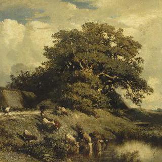 물을 먹고 있는 가축들과 참나무가 있는 풍경