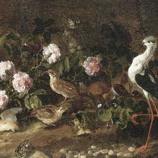 올빼미와 따오기가 있는 정물, 허무함(바니타스)