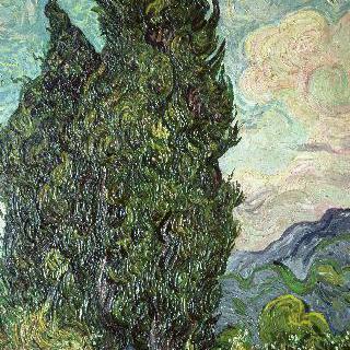 싸이프러스 나무