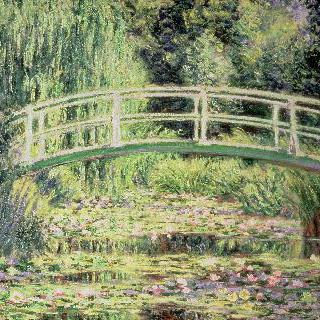 흰색 수련 연못