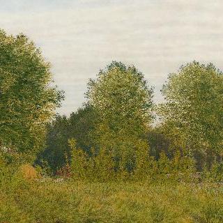 팽번의 흑양나무 숲