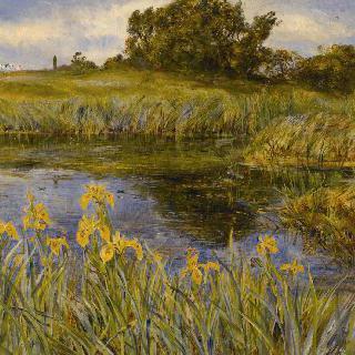 노란 붓꽃이 핀 연못