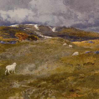 양이 있는 레이크랜드 산비탈 풍경