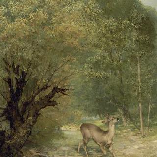 주위를 살피는 사슴, 봄