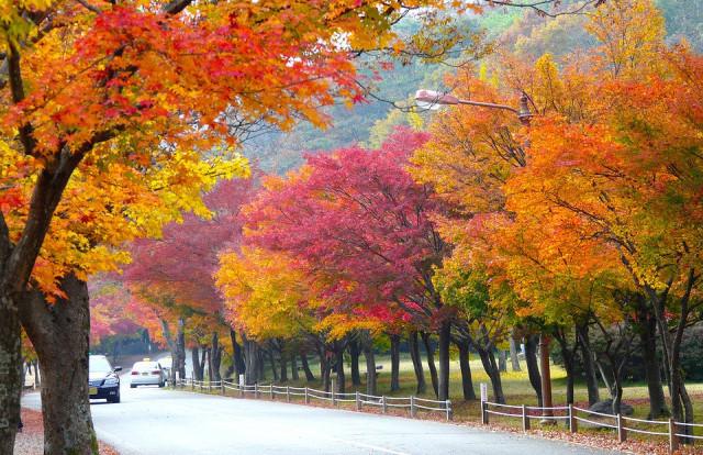 전북 정읍