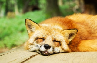 졸음을 유발하는 스타는?